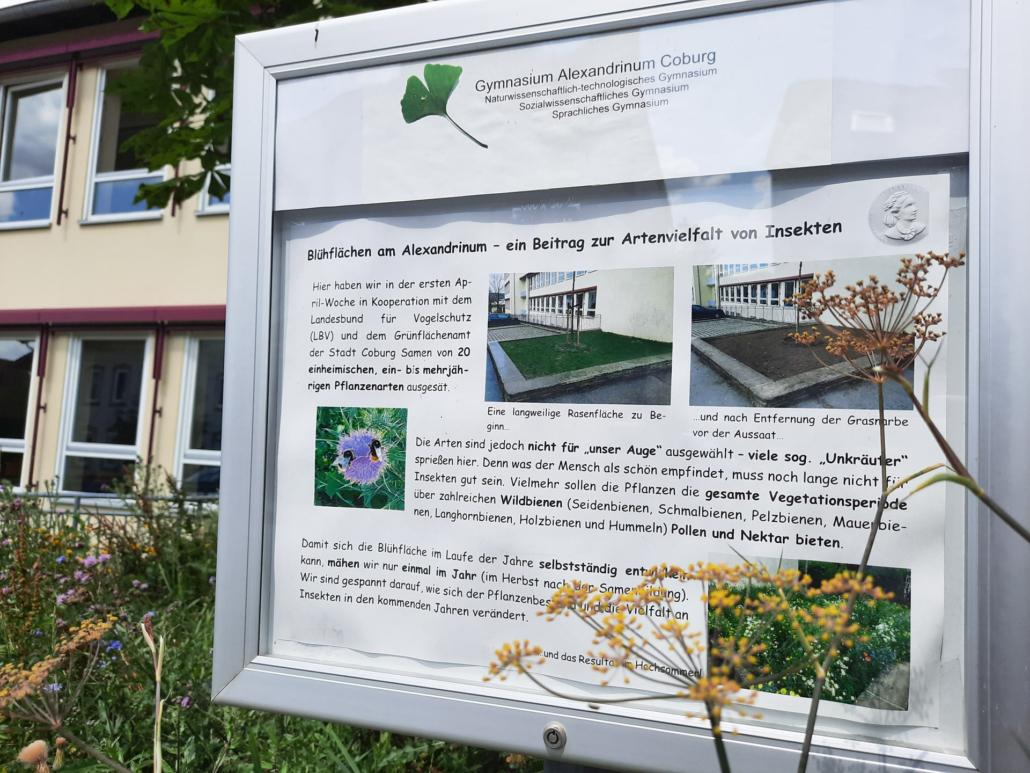 Blühfläche Gymnasium Alexandrinum